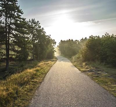 朝の散歩道