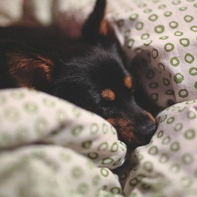 sleep_dog