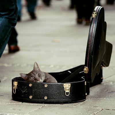 通販でギターとかウクレレ買うのは、ソシャゲでガチャ引くのと同じ